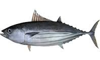 Where can I buy fresh Skipjack tuna (Aku) from a local farmer.