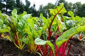 Where can i sell my local Chard.
