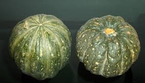Where can i buy Kabocha Squash?  Find out which local farmer has Kabocha Squash for sale.