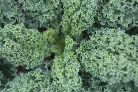 Where can i buy Kale?  Find out which local farmer has Kale for sale.