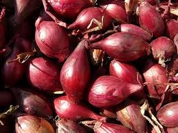 Where can I buy fresh Shallot from a local farmer.