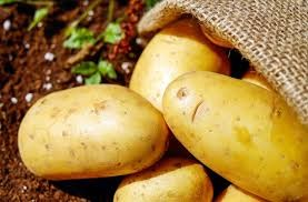 Where can i buy Sweet potato - Yellow?  Find out which local farmer has Sweet potato - Yellow