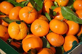 Where can i buy Clementine?  Find out which local farmer has Clementine for sale.