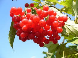 Where can I buy fresh Cranberry from a local farmer.
