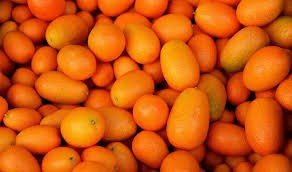 Where can i buy Kumquat?  Find out which local farmer has Kumquat for sale.