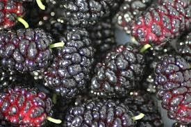 Where can I buy fresh Mulberry from a local farmer.