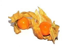 Where can i buy Poha Berry Physalis?  Find out which local farmer has Poha Berry Physalis for sale.