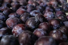 Where can i buy Plum?  Find out which local farmer has Plum for sale.