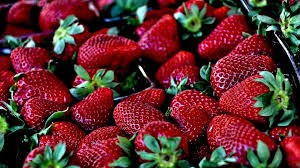 Where can i sell my local Strawberry.