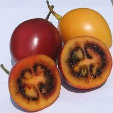 Where can I buy fresh Tamarillo from a local farmer.