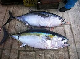 Where can i buy Ahi Bigeye Tuna?  Find out which local farmer has Ahi Bigeye Tuna for sale.