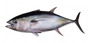 Where can I buy fresh Albacore from a local farmer.