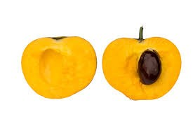 Where can I buy fresh Egg Fruit Sapote from a local farmer.