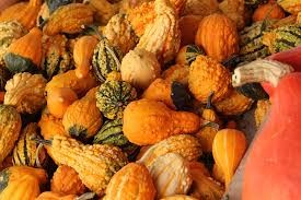 Where can i buy Baby Mixed Gourds?  Find out which local farmer has Baby Mixed Gourds for sale.