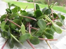 Where can i buy Sunflower Sprouts?  Find out which local farmer has Sunflower Sprouts for sale.